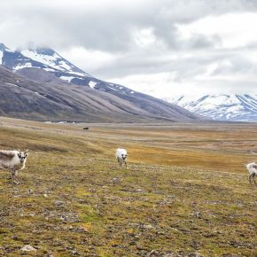 Post Vaccine Travel: Norway'sSvalbard